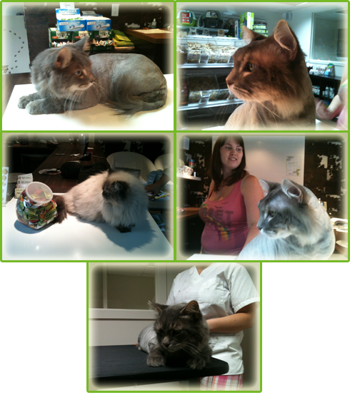 Gare gamelle cat grooming and toiletry services montreal for Service personne tonte pelouse