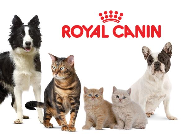 https://www.garegamelle.ca/portfolio-view/royal-canin-2/