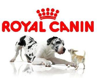 https://www.garegamelle.ca/portfolio-view/royal-canin/